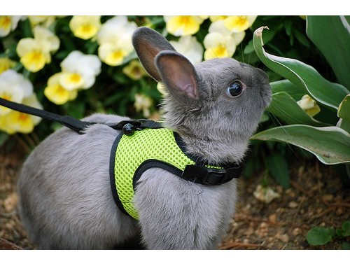 "Arnés para conejitos ""comfortable harness"""
