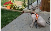 "Arnés para gatos ""Confortable Harness"""