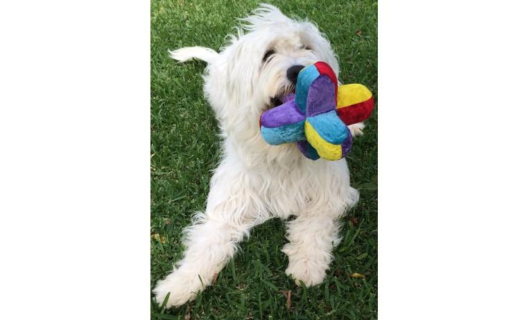 Juguete 6 picos para perros